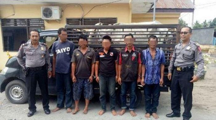 Komplotan Pencuri Spesialis Ternak Ditangkap Polisi, 4 Ekor Lembu Jadi Barang Bukti
