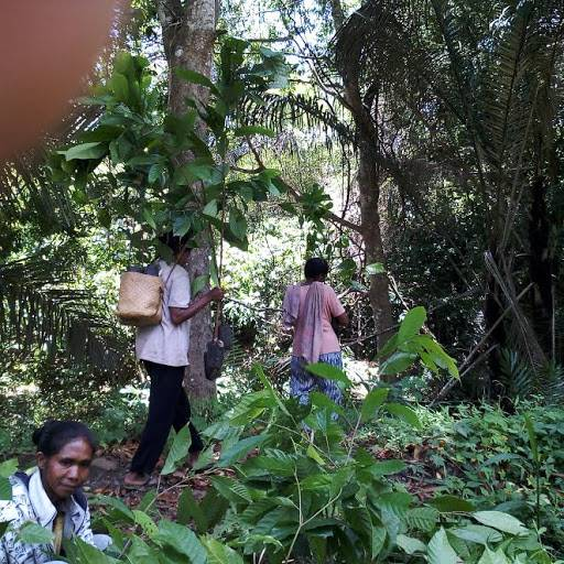 KLHK Alokasikan Rp 1,01 Triliun Bantu Masyarakat dan Petani Hutan Terdampak Covid-19