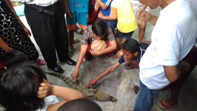 Warga Sei Mati Tangkap Buaya Muara di Sungai Deli
