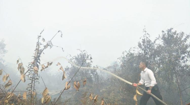 Kasubdit Tipiter Polda Sumut Bantu Padamkan Lahan Kebakaran Hutan di Labuhan Batu
