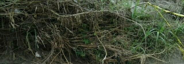 Jenazah Diduga Korban Pembunuhan Ditemukan di Sungai Belumei