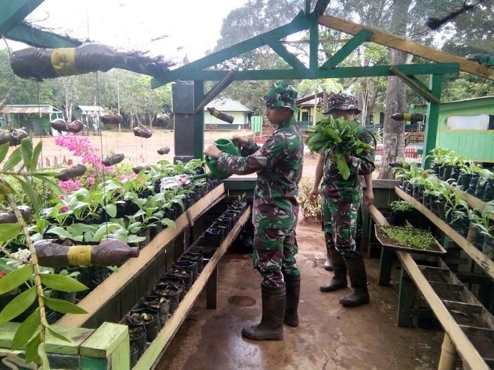 Prajurit TNI Jaga Perbatasan RI-PNG, Sembari Bekerja, Manfaatkan Lahan Kosong Jadi Kebun Sayur