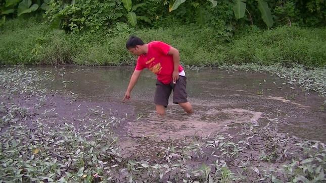 Sawah Warga Ajibaho Rusak Tercemar Limbah Pabrik Kelapa Sawit