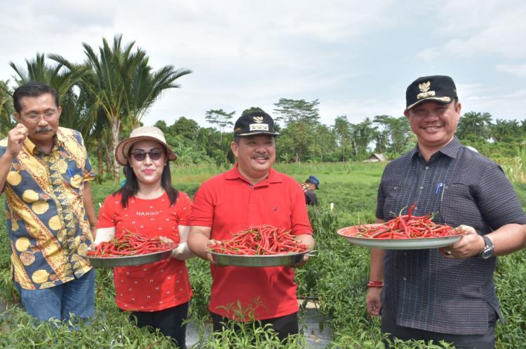 Walikota dan Wakil Walikota Gunungsitoli Hadiri Pelaksanaan Panen Raya Cabai di Idanoi