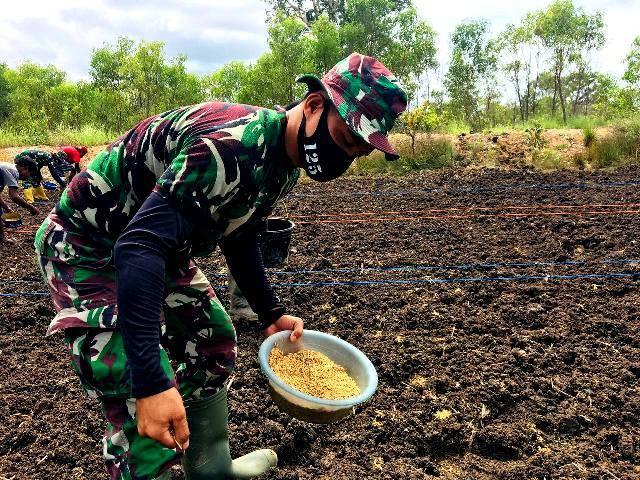 Bertanam Padi di Tapal Batas, Warga Kampung Kuler Dibantu Prajurit Satgas Pamtas Yonif 125/Simbisa