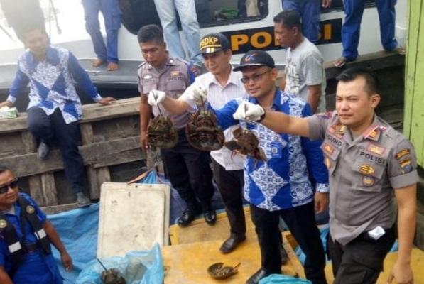 Penyelundup Belangkas Diciduk Satpolair Polres Tanjungbalai