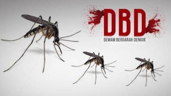 Perlu Diketahui, Nyamuk DBD Lebih Senang Berada di Air Bersih yang Tergenang