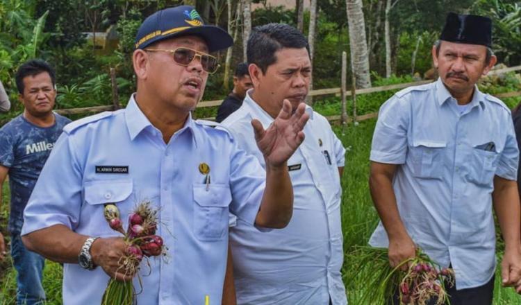 Wakil Walikota Padangsidimpuan Bersama TPID Meninjau Kebun Bawang dan Cabai Warga Angkola Julu