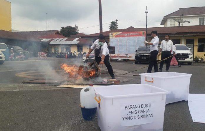 57 Kilo Ganja Dimusnahkan Polres Siantar
