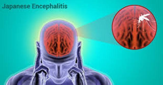 Vaksinasi Japanese Encephalitis Belum Ada di Sumut