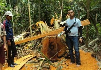 Tiga Pelaku Pembalakan Hutan Ditangkap Polisi di Miranti Riau