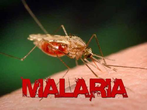 Waspadai Malaria di Tengah Pandemi Covid-19