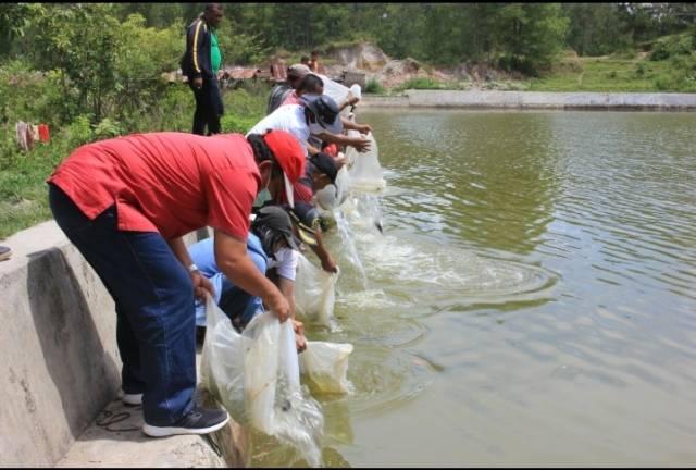 Pemkab Samosir Restocking 40 Ribu Benih Ikan Nila
