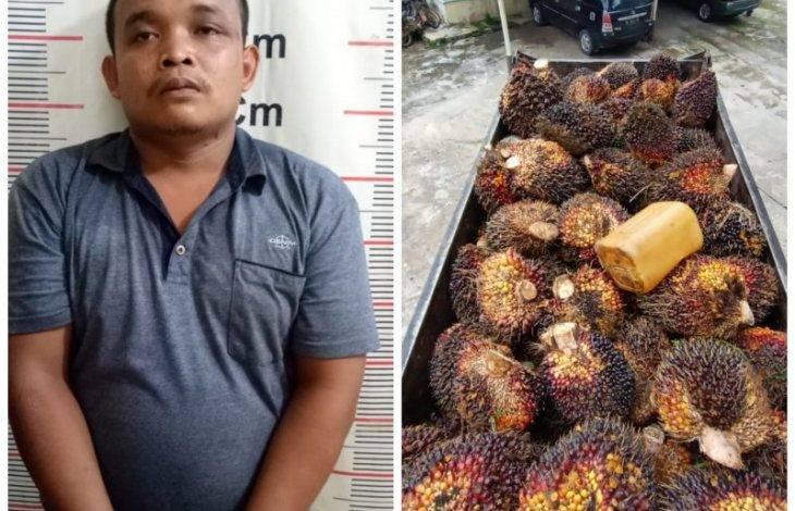 Mencuri 7 Ton Sawit Saat Lebaran, Pak Jarwo Ditangkap Polsek Salapian