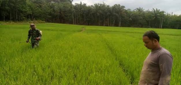 Impor Beras Indonesia Berhenti, DPR Beri Apresiasi Pemerintahan Jokowi