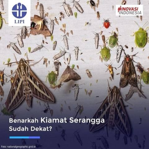 Populasi Menurun, Kiamat Serangga Sudah Dekat?