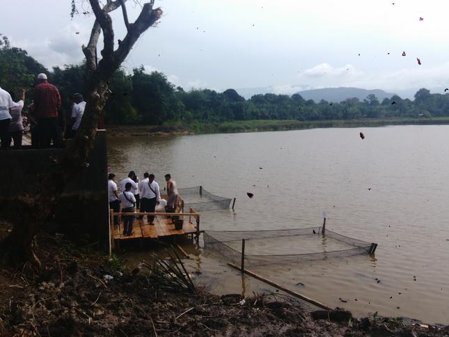 Gubernur Sumut akan Taburkan 22 Ribu Benih Ikan Nila di Waduk Sutan