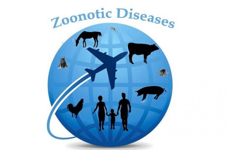 Presiden Jokowi Instruksikan Menkes Tingkatkan Pencegahan dan Pengendalian Zoonosis