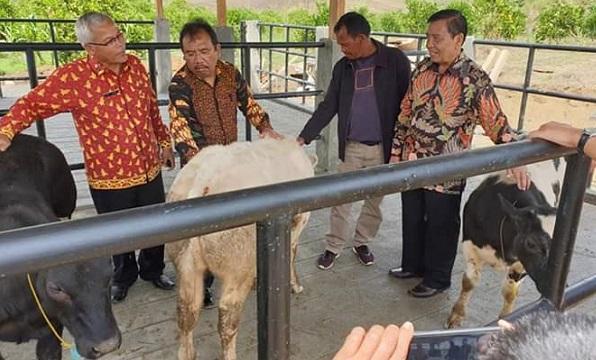 Pemkab Humbahas Terima Sapi Belgian Blue dari BPTU-HPT Palembang