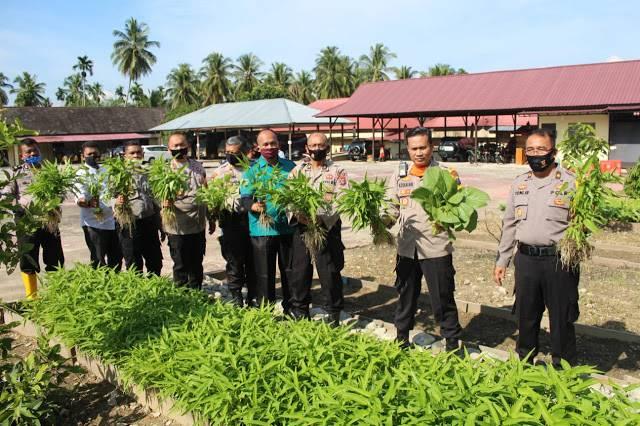 Kapolres Madina Tanam Sayuran, Manfaatkan Lahan Kosong untuk Perkuat Ketahanan Pangan