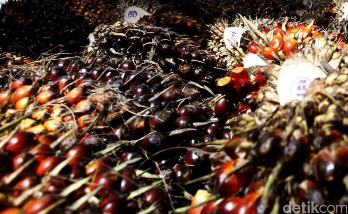 Polsek Teluk Mengkudu Tangkap Pencuri Sawit, Aksinya Sering Ketahuan, Si Maling Malah Aniaya 2 Penjaga Kebun