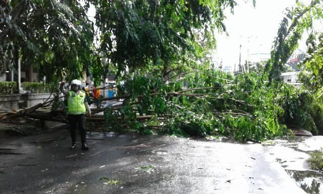 Hujan Disertai Angin Kencang di Kota Medan Tumbangkan Sejumlah Pohon di Jalan Imam Bonjol-Cut Meutia