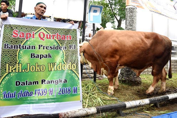 Masyarakat Sumut Antusias Terima Bantuan Sapi Kurban dari Presiden Jokowi