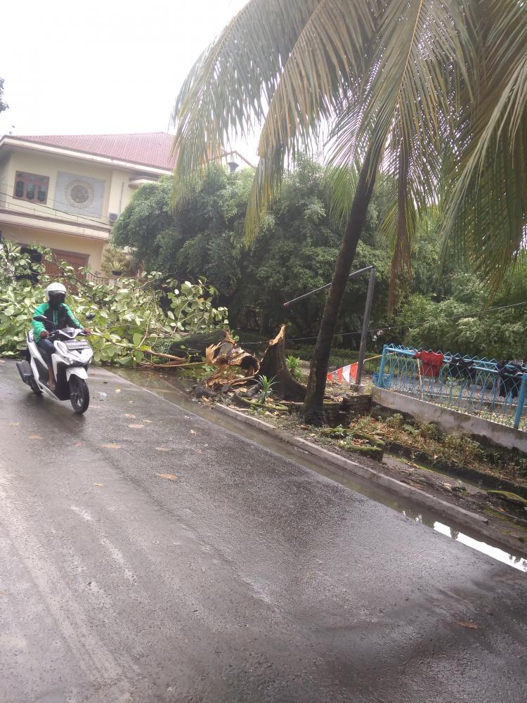Hujan Deras di Kota Medan, Satu Pohon Tua Tumbang di Jalan Perpustakaan