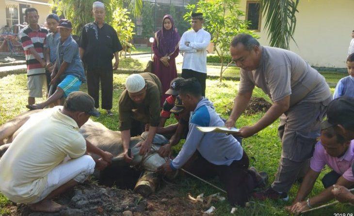 Qurban Polres Langkat, 12 Sapi dan 2 Kambing Dibagikan ke Masyarakat