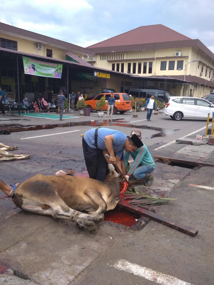Kapolsek Medan Baru Sumbang Lembu untuk Dikurbankan di Mapolrestabes Medan