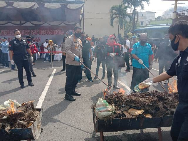 Polrestabes Medan Bakar 358 Kilo Ganja Kering, Pemusnahan Barang Bukti Narkotika Senilai Rp770 Juta