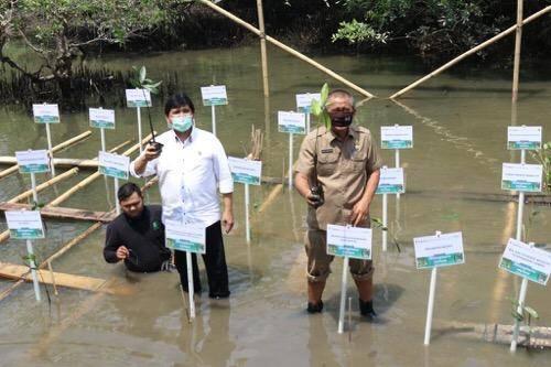 Ekowisata Hutan Mangrove Sicanang, Pemko Medan Dukung Upaya Pelestarian dan Pengembangan di Belawan