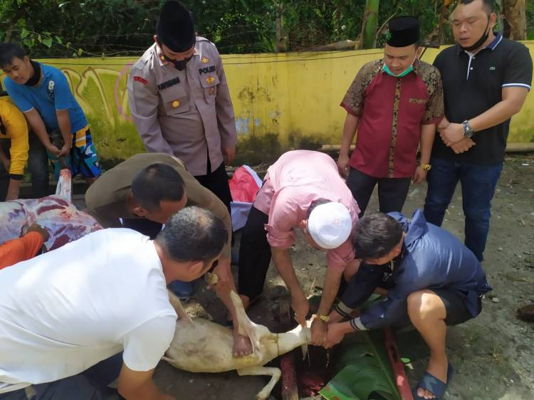 Kapolsek Medan Helvetia Kurban 2 Ekor Domba di  PCNU Kota Medan