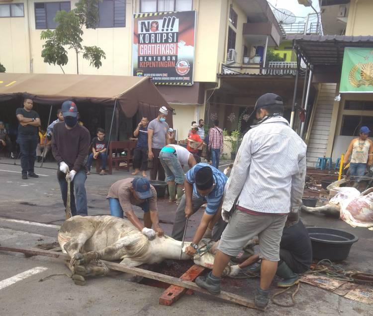 Satuan Narkoba Polrestabes Medan Kurban 3 Ekor Sapi