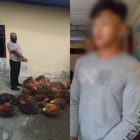 Curi Kelapa Sawit, Remaja Ini Ditangkap Polsek Talun Kenas