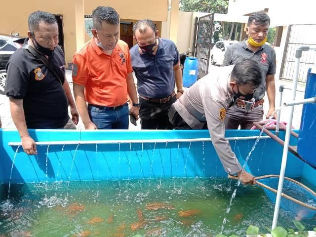 Sukses Ketahanan Pangan, Polsek Medan Timur Panen Ikan Nila dan Patin di Mapolsek