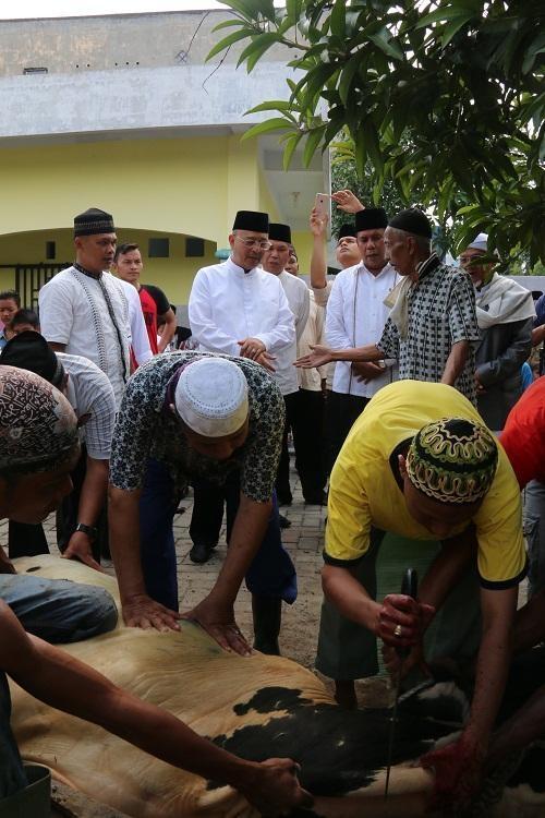 Walikota Saksikan Penyembelihan Sapi Kurban Kecamatan Medan Selayang