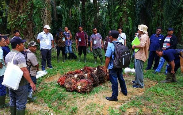 Dinas Pertanian Tapsel Bekerjasama dengan CII Indonesia Gelar Pelatihan Petani Kelapa Sawit di PTPN III Batang Toru