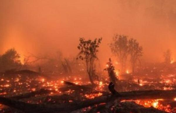Padamkan Kebakaran Hutan di Sumatera, Pemerintah Kerahkan Puluhan Helikopter