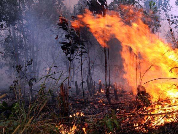 Deteksi 2.510 Titik Panas, BMKG:Tidak Ada Sebaran Asap Lintas Batas Sumatera ke Malaysia