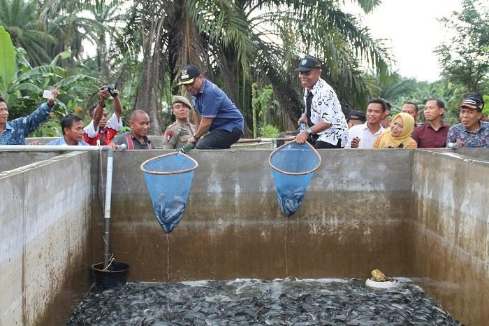 Plt Bupati Labuhanbatu Apresiasi Inovasi Budidaya Lele di Desa Pematang Seleng