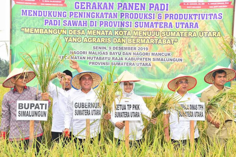 Panen Padi di Simalungun, Gubernur Minta Tidak Ada IMB di Lahan Pertanian