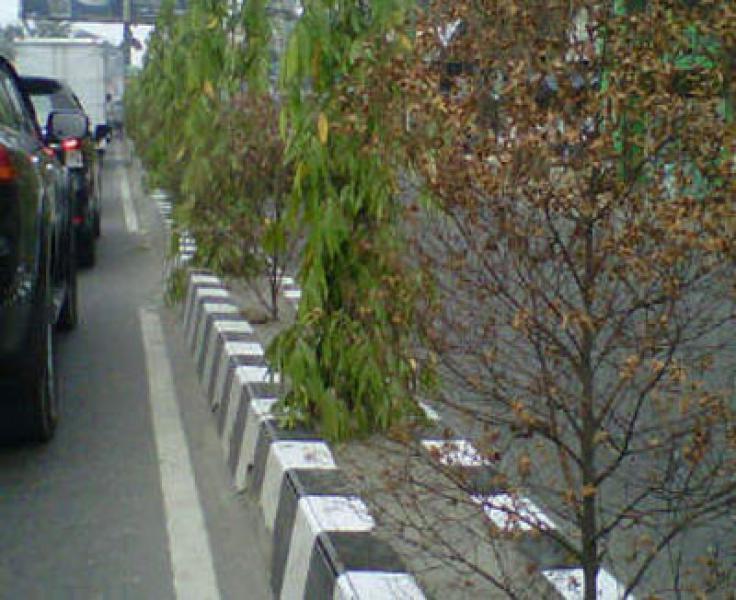Pohon Median Jalan di Selayang dan Tuntungan Bermatian, Plt Walikota Medan Murka