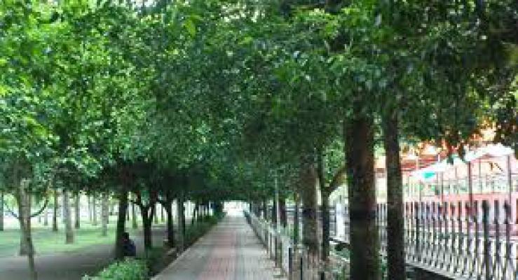 Medan Butuh Penambahan Hutan Kota