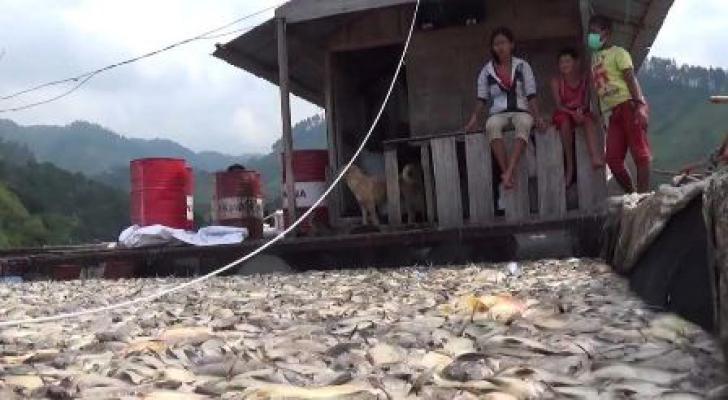 Diskanla Sumut : Tunda Panen Ikan, Membuat Oksigen di Air Danau Toba Berkurang