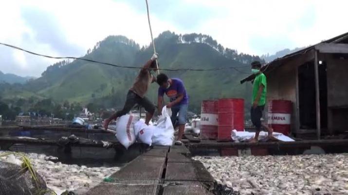 Pemprov Sumut Belum Miliki Solusi Penyelesaian KJA dan Pencemaran Danau Toba