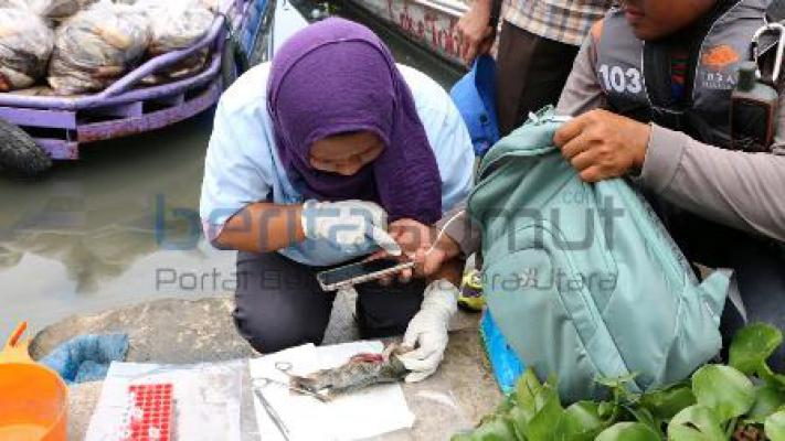 Terkait Matinya Ikan di Danau Toba Sudah Diprediksi BLH Pemprov Sumut