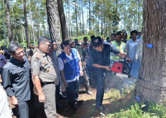 Gubernur Sumut Tebang Perdana 180 Ha Hutan Untuk Lahan Pertanian Pengungsi Sinabung