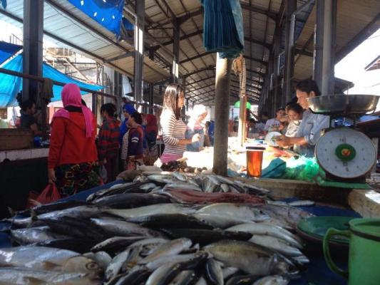 Harga Ikan di Binjai Berangsur Normal