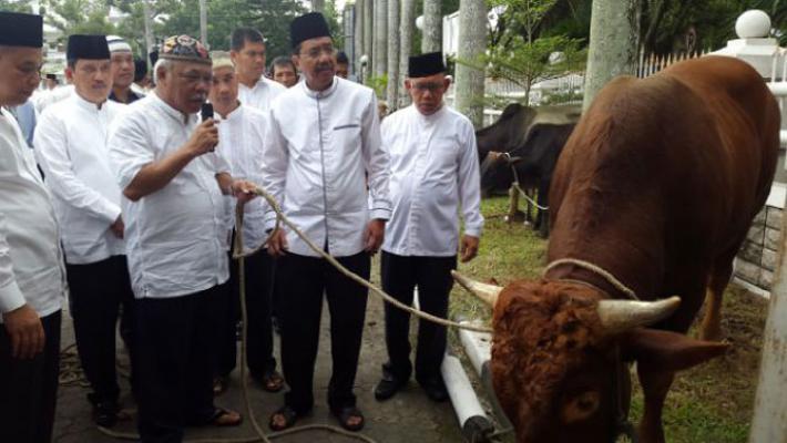 Jokowi Kurban 2 Ekor Sapi Raksasa di Sumut